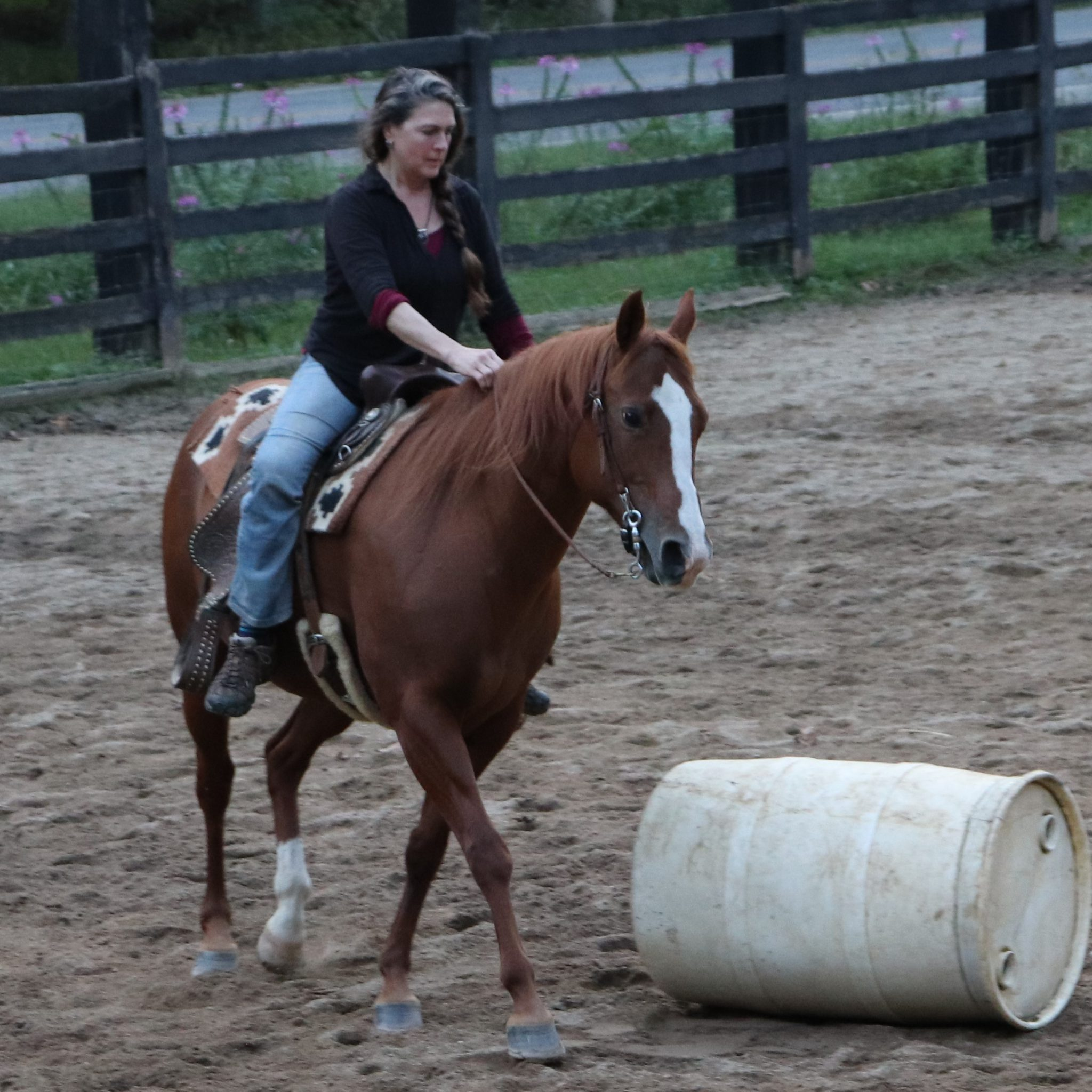 Horse Adoption Policies