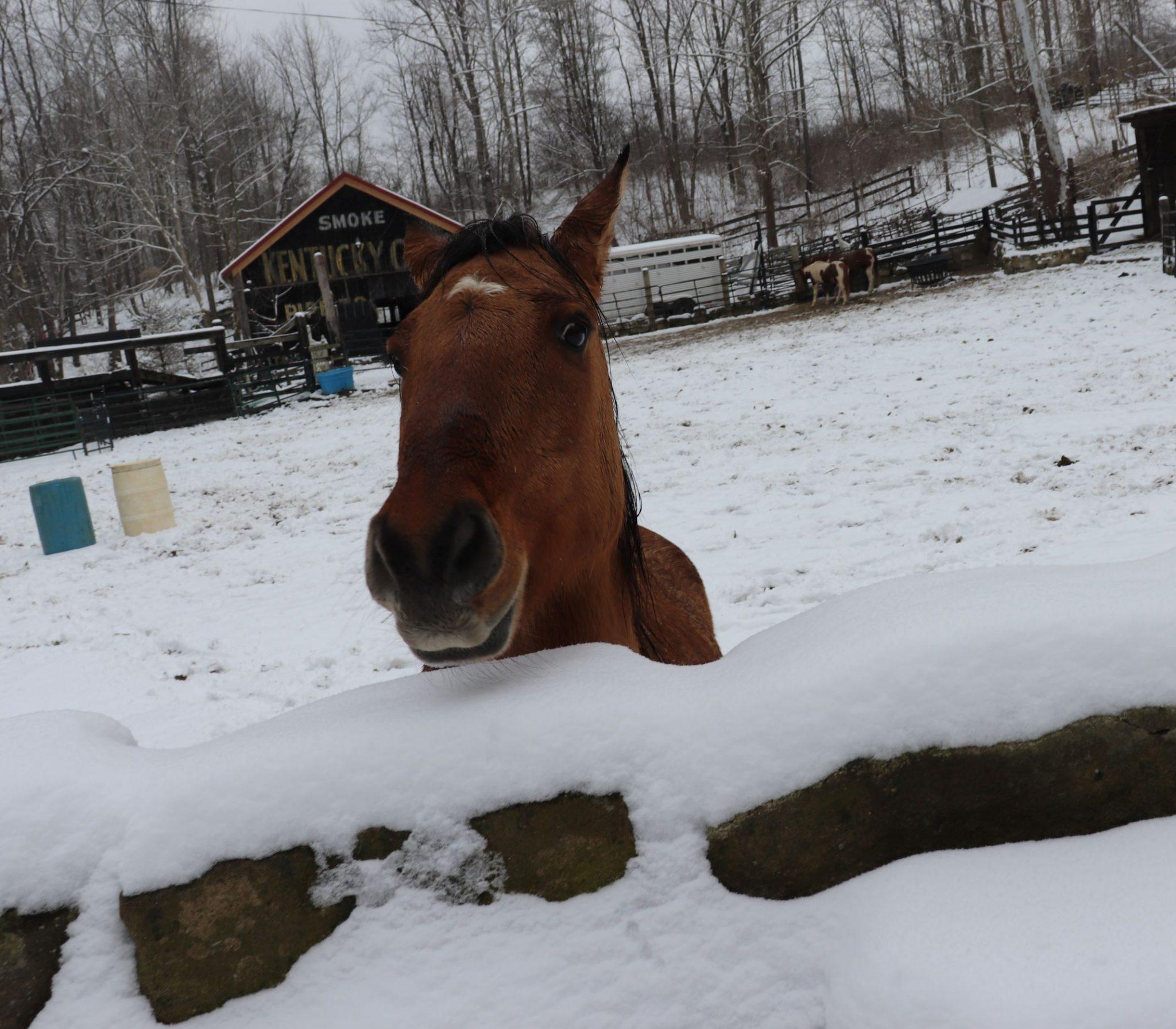 Horse Adoption Polices